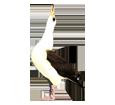 Albatros - color 16019