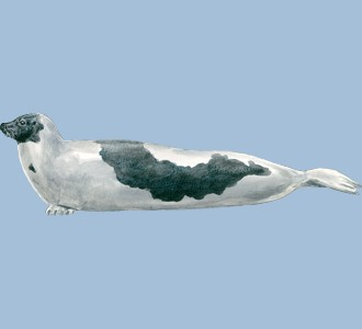 Acoger a un animal marino de especie foca