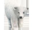 Oso polar - color 7