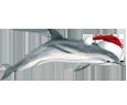 Delfín - color 117