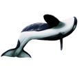 Orca - color 16022