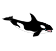Orca - color 185