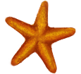 Estrella de mar - color 17