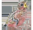 Pingüino torda - color 65