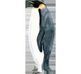 Pingüino emperador - color 59